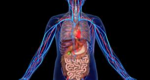 あなたの症状は、どの臓器から? ~「内臓」で見る病気のタイプ~