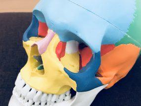 自律神経を整えるための頭蓋骨の調整